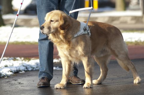 Facility or therapy dogs in courts